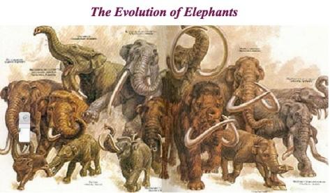 elephevolut