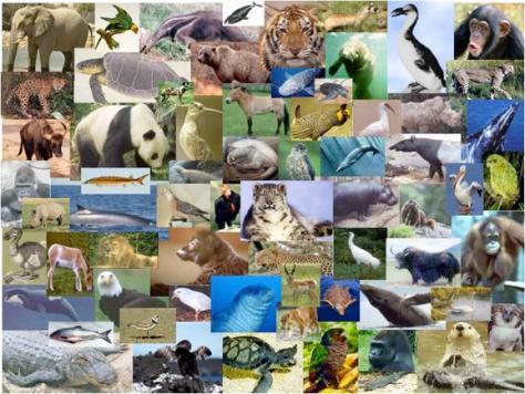biodiversity-2_orig